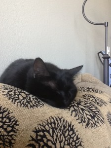 my black cat Mitzi snoozing on the couch.